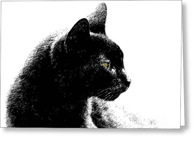 Greeting Card featuring the photograph Old Black Cat Two by Lila Fisher-Wenzel