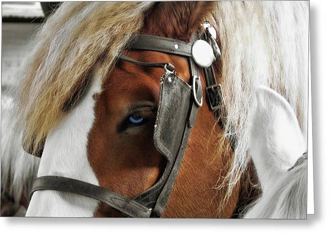 Old Blue Eyes Savannah Greeting Card by JAMART Photography