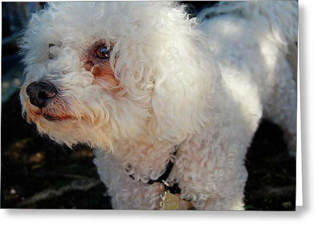 Old Buddy Greeting Card by JAMART Photography