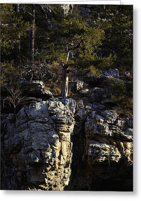 Greeting Card featuring the photograph Old Cedar Buffalo National River by Michael Dougherty