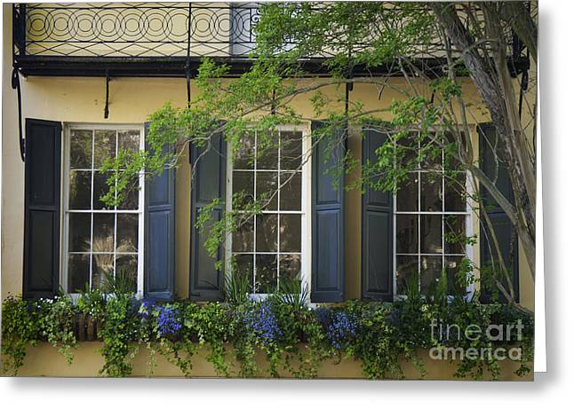 Old Charleston Window  Greeting Card