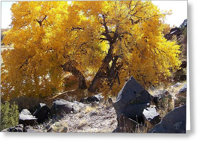 Old Cottonwood Below Black Rocks Greeting Card
