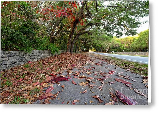 Old Cutler Road Coral Gables Greeting Card by Eyzen M Kim