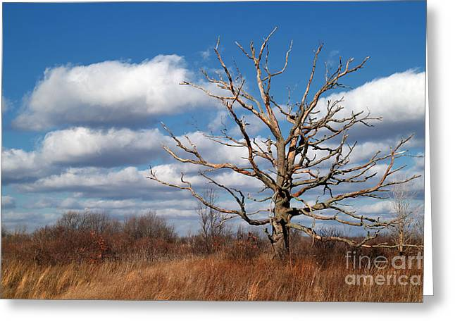 Old Dead Tree Greeting Card by Jeff Holbrook