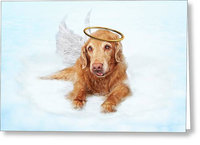 Old Dog Angel On Cloud In Heaven Greeting Card by Susan Schmitz