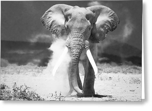 Old Elephant At Amboseli National Park Kenya Greeting Card by Konstantin Kalishko