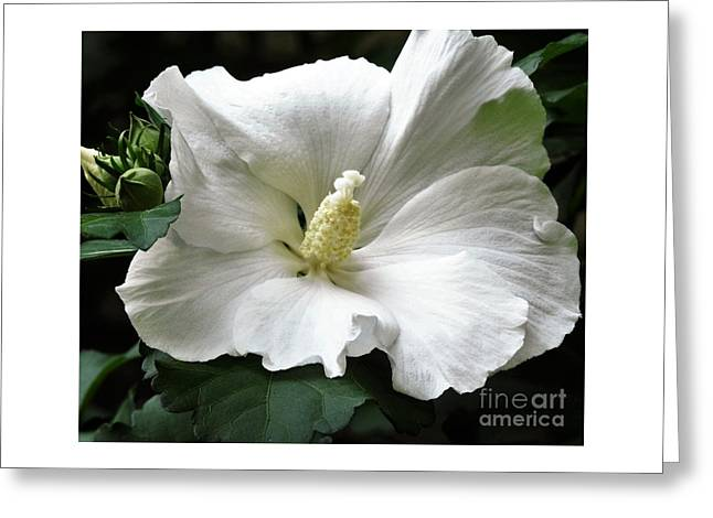 Old Fashioned Flower Greeting Card by Jan Gelders