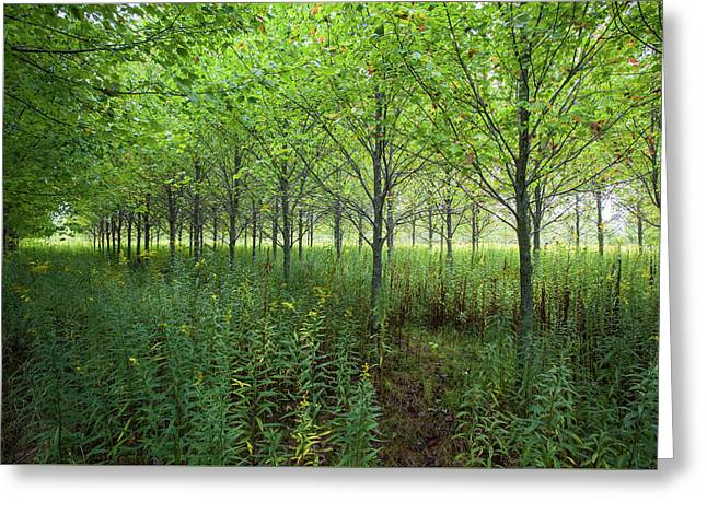 Greeting Card featuring the photograph Old Field Sentinels by Lon Dittrick