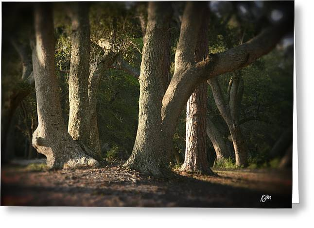 Greeting Card featuring the photograph Old Friends Meet In The Woods by Phil Mancuso