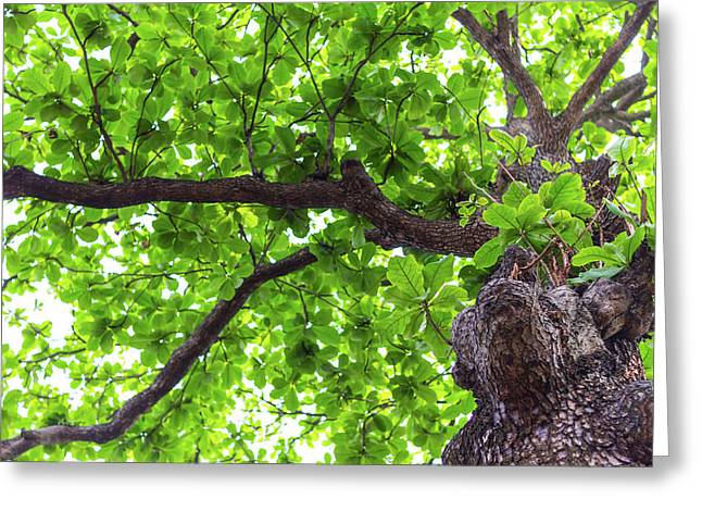 Greeting Card featuring the photograph Old Green Tree by Jingjits Photography