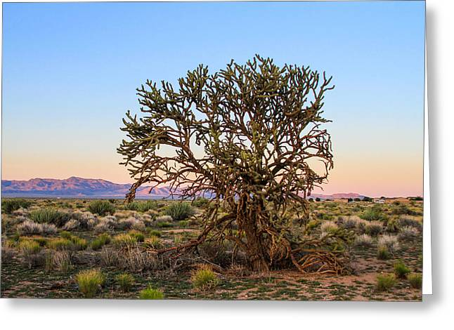 Old Growth Cholla Cactus View 2 Greeting Card