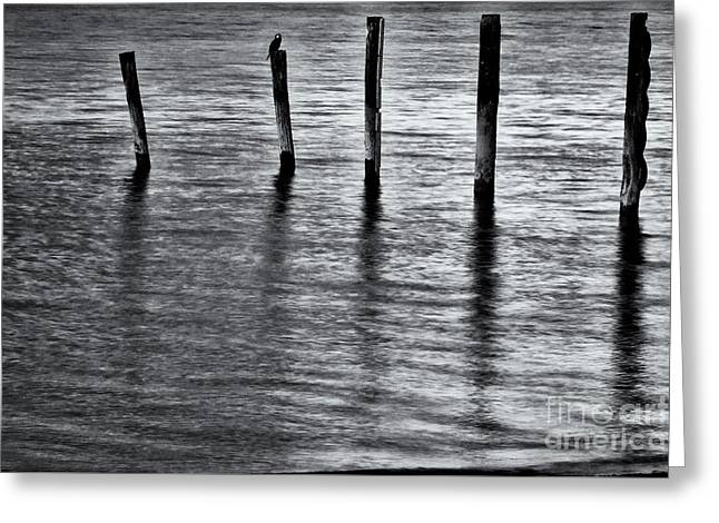 Greeting Card featuring the photograph Old Jetty - S by Werner Padarin