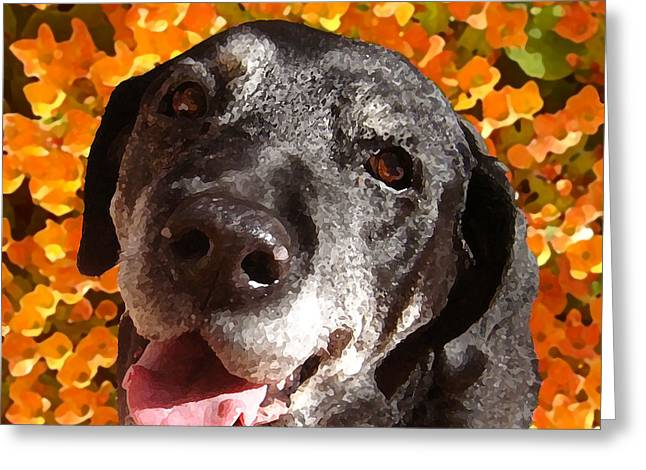 Old Labrador Greeting Card by Amy Vangsgard