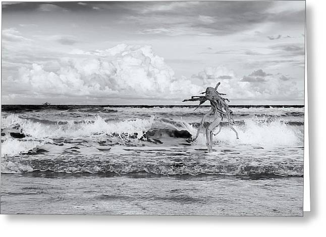 Greeting Card featuring the photograph Old Man In The Sea by Carolyn Dalessandro