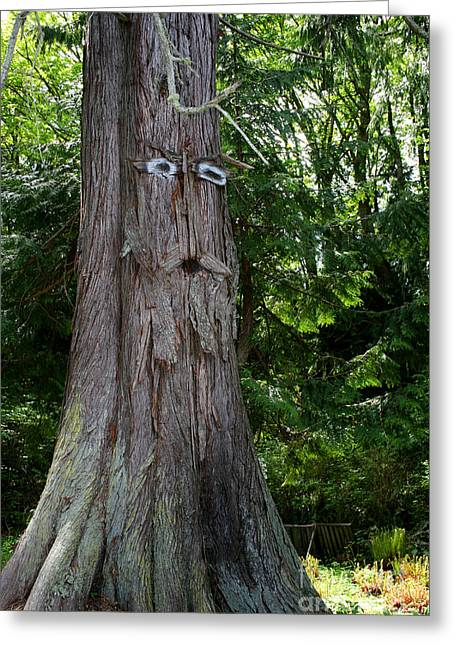 Old Man Tree Greeting Card by Robert Nankervis