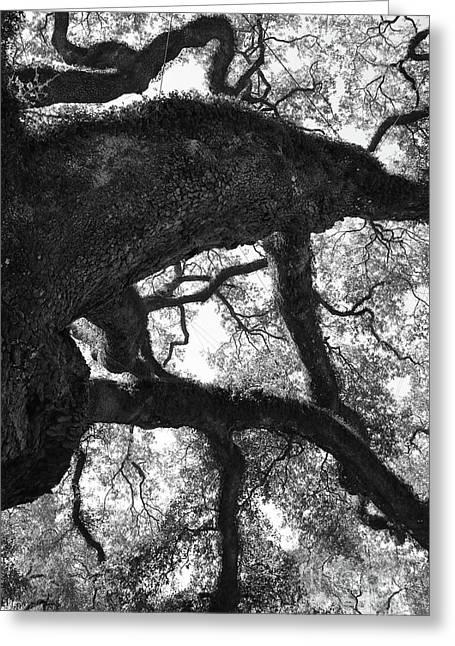 Old Oak Black And White Greeting Card