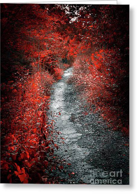 Old Path In Red Forest Greeting Card
