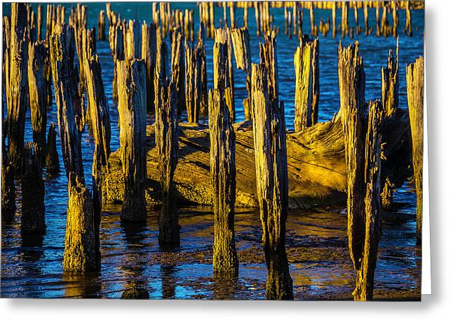 Old Pier Posts In Evening Light Greeting Card