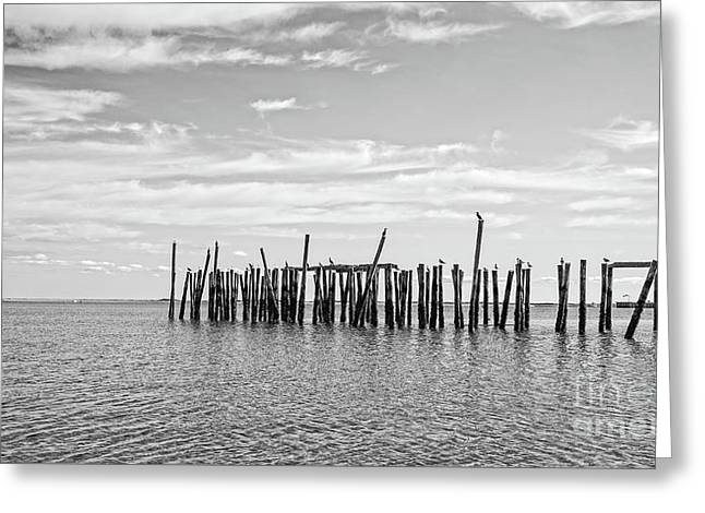 Old Pier Provincetown Harbor Cape Cod Greeting Card