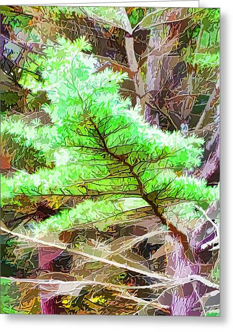 Old Pine Tree 1 Greeting Card by Lanjee Chee