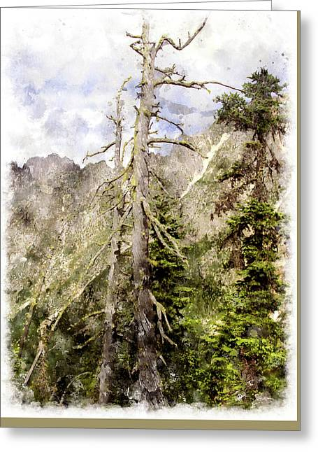 Old Pines Cascades Wc Greeting Card by Peter J Sucy