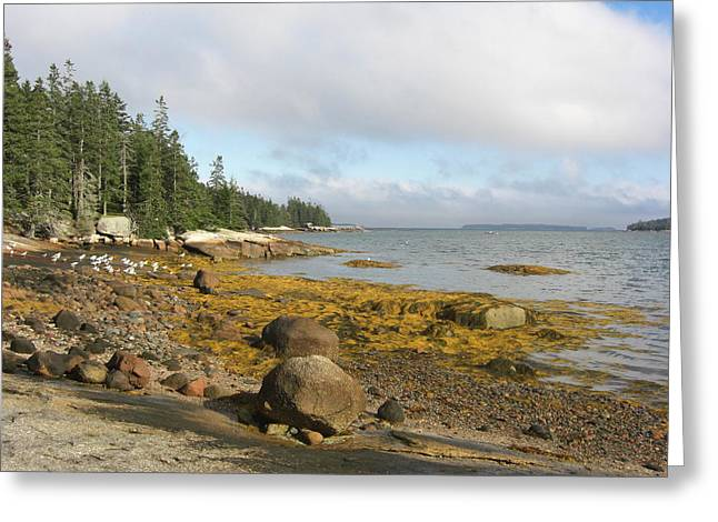 Old Quarry Beach, Stonington, Me Greeting Card