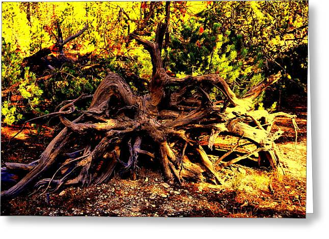 Old Roots Greeting Card by Aron Chervin