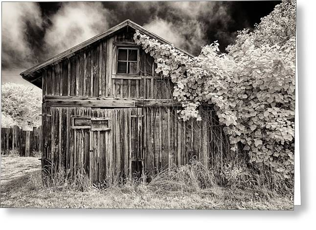 Greeting Card featuring the photograph Old Shed In Sepia by Greg Nyquist