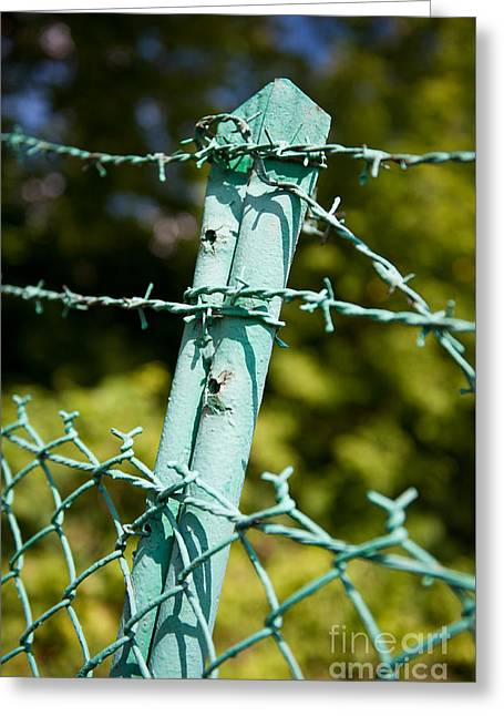 Old Steel Barbed Wire Fence Greeting Card