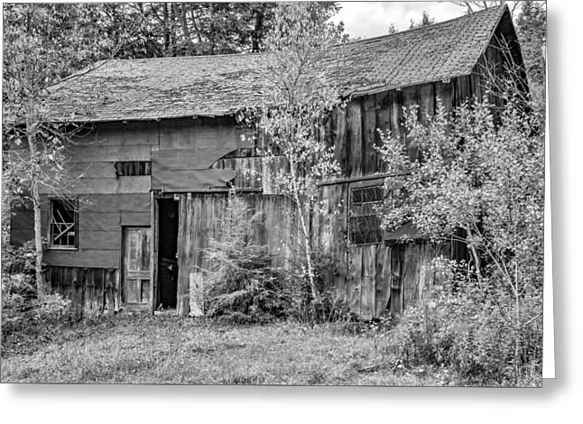 Old Timer 3 Bw Greeting Card