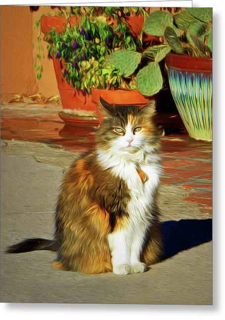 Greeting Card featuring the photograph Old Town Cat by Nikolyn McDonald
