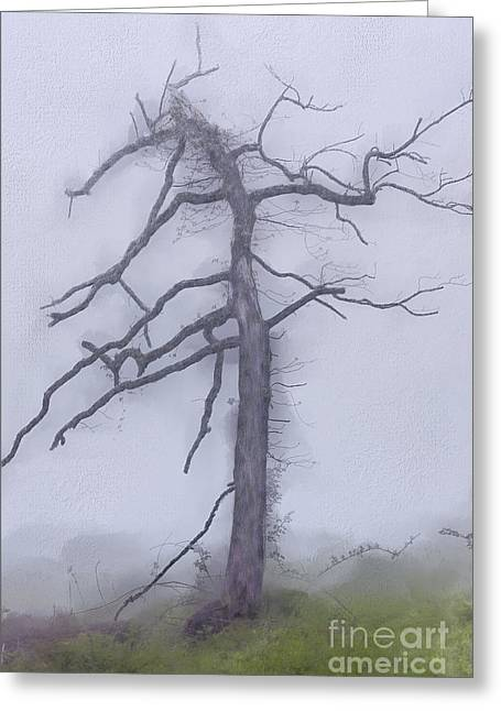 Old Tree In Fog In The Blue Ridge Ap Greeting Card