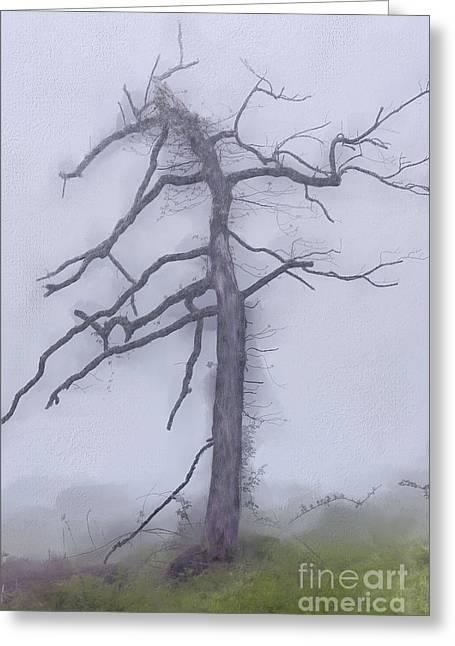 Old Tree In Fog In The Blue Ridge Ap Greeting Card