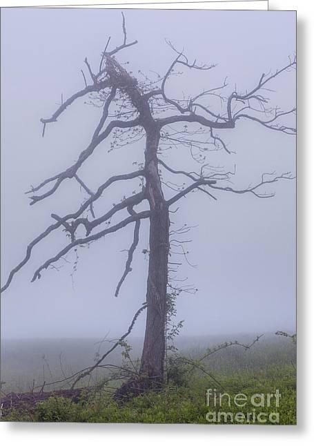 Old Tree In Fog In The Blue Ridge Greeting Card