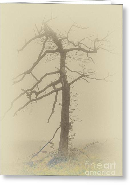 Old Tree In Fog In The Blue Ridge Fx Greeting Card by Dan Carmichael