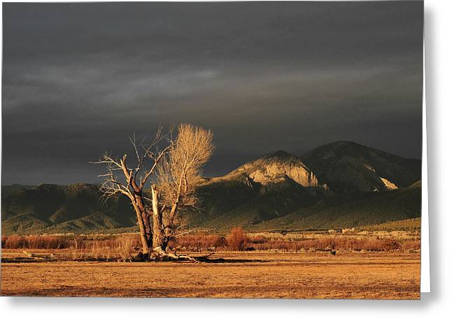 Sunset On The Old Cottonwood Greeting Card