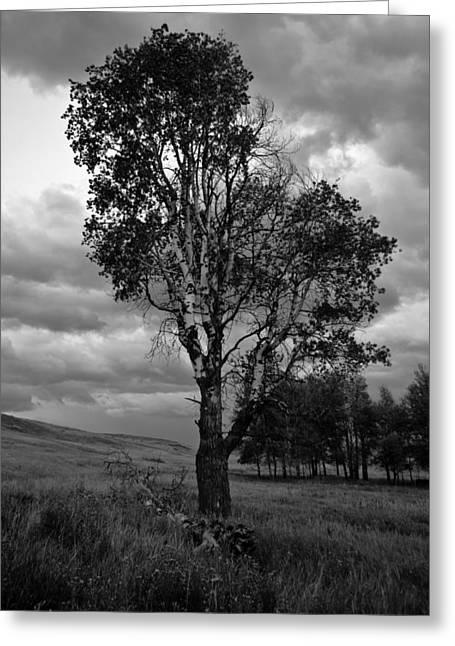 Old Tree, Lost Trail Wildlife Refuge Greeting Card