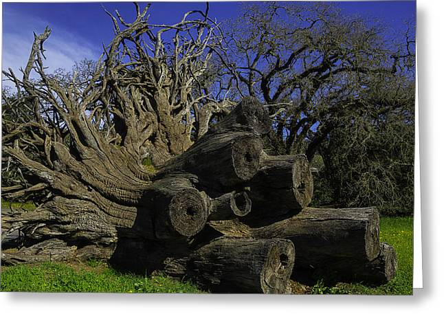 Old Tree Roots Greeting Card by Garry Gay