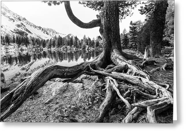 Old Tree Greeting Card by Susanne La.