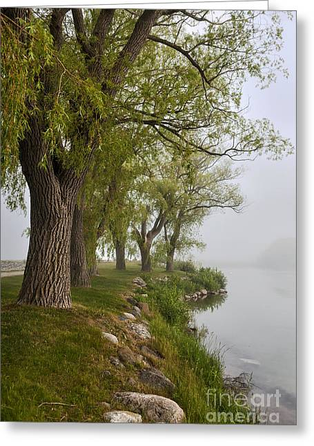 Old Trees On Foggy Shore Greeting Card by Elena Elisseeva
