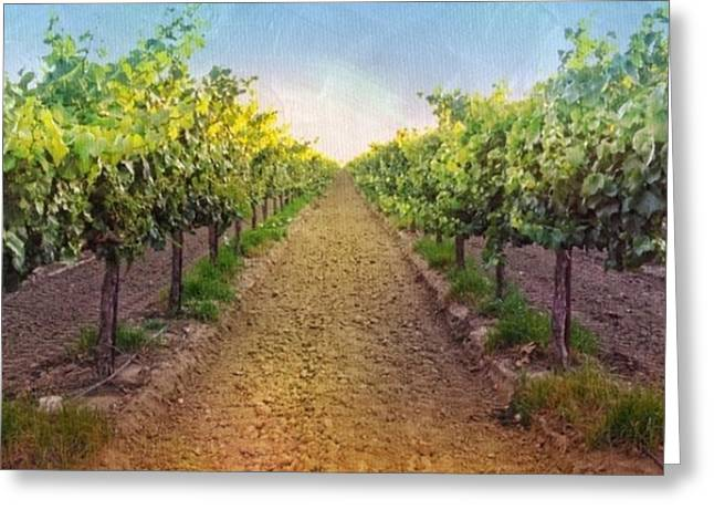Old #vineyard Photo I Rescued From My Greeting Card
