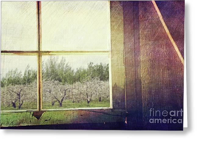 Old Window Looking Out To Apple Orchard Greeting Card by Sandra Cunningham