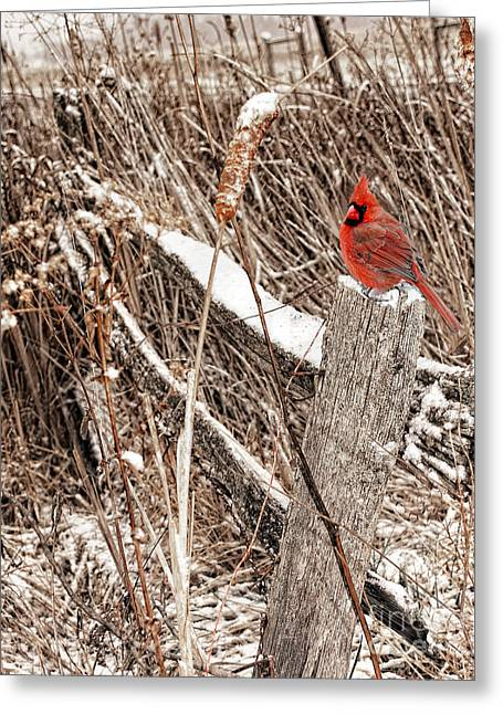 Old Winter Fence Post With Cardinal Greeting Card by Timothy Flanigan