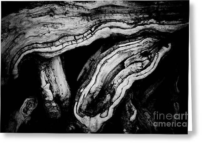 Old Wood Abstract Vintage Background  Greeting Card