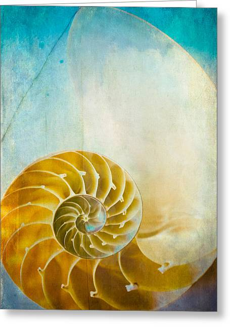 Old World Treasures - Nautilus Greeting Card by Colleen Kammerer