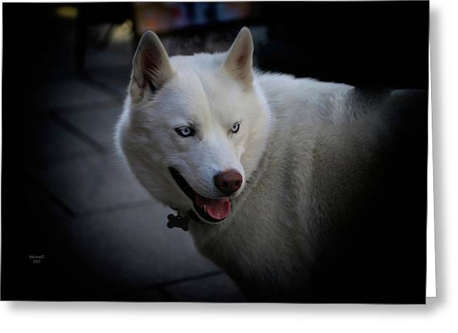Ole Blue Eyes Greeting Card by Dennis Baswell