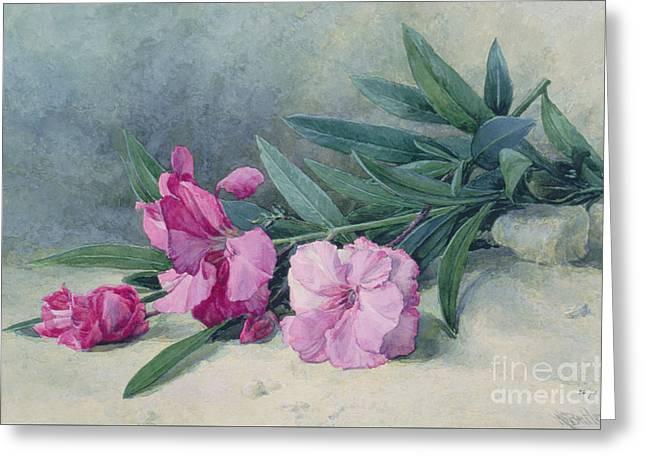 Oleander Blossom Greeting Card