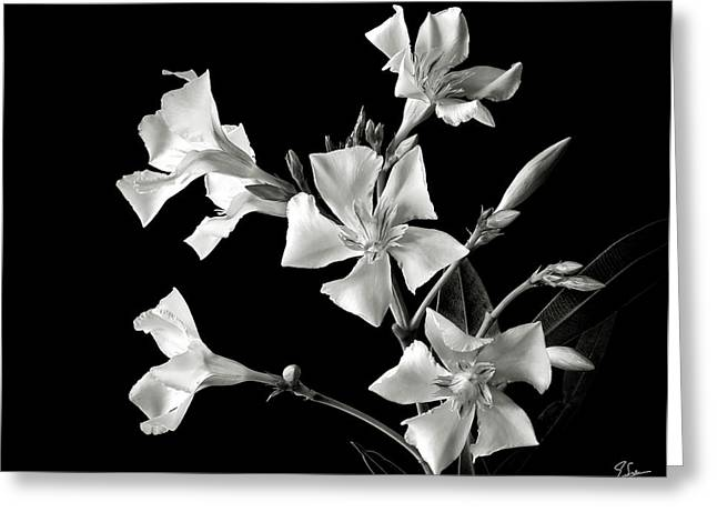 Flower Photos Greeting Cards - Oleander in Black and White Greeting Card by Endre Balogh