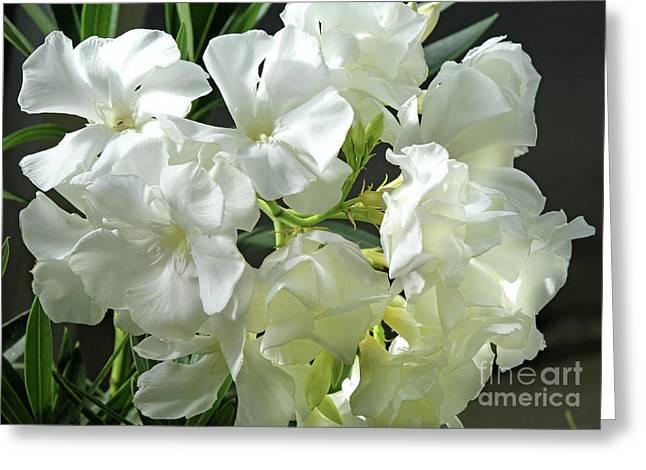 Oleander Mont Blanc 2 Greeting Card