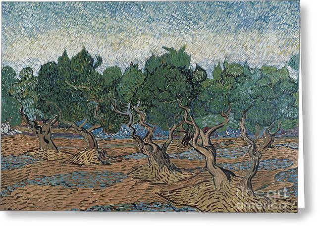Olive Grove, 1889 Greeting Card